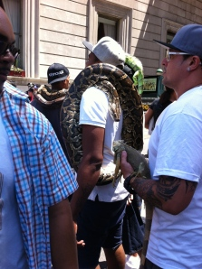 Certainly, it's important to wear your reptiles to the parade.